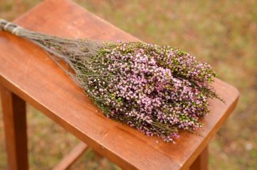 Bunch of preserved pink heather
