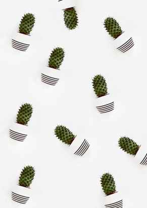 Cactus aesthetic image iPhone lock screen