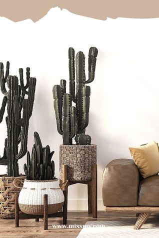 Cactus plants are the best choice for balancing humidity or moisture levels in the living space.  Cactus indoor decor