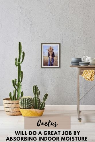 Cactus will do a great job by absorbing indoor moisture