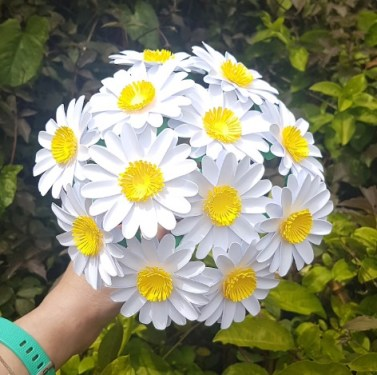 Paper Daisies - White Paper Flower Daisies - Home Decor