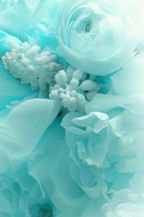 Turquoise flowers aesthetic image