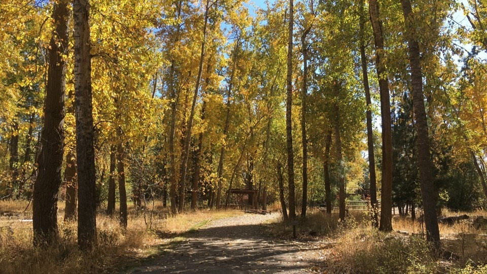 Into the Cottonwoods at Travelers Rest State Park in Lolo Montana