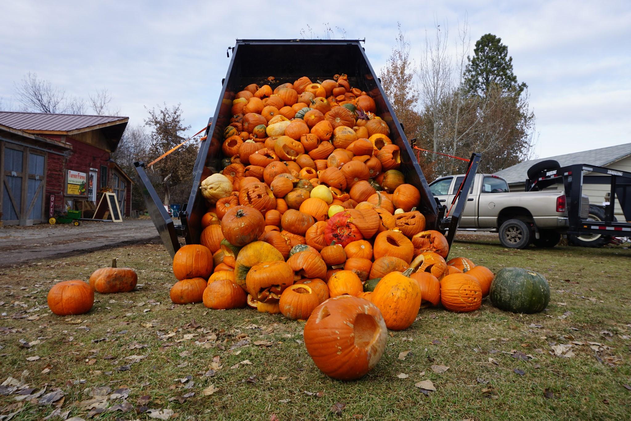 Pumpkin ReHarvest