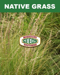 Native Grass Category