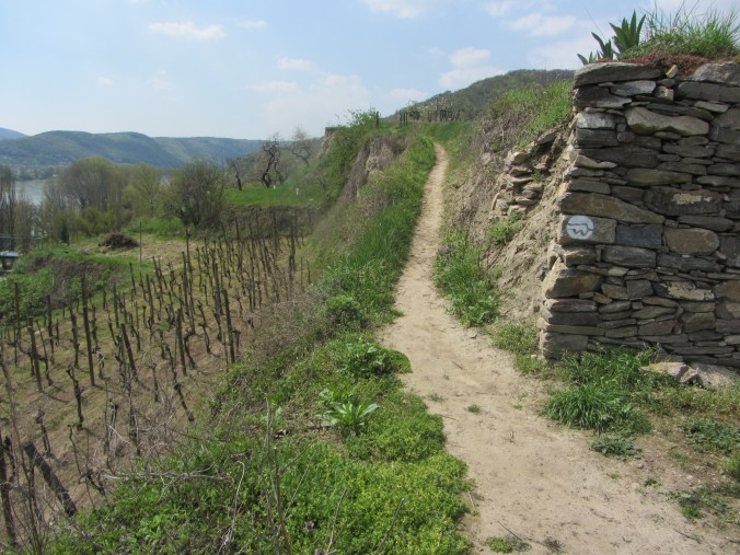 Vineyard, trail and wall with trail marker