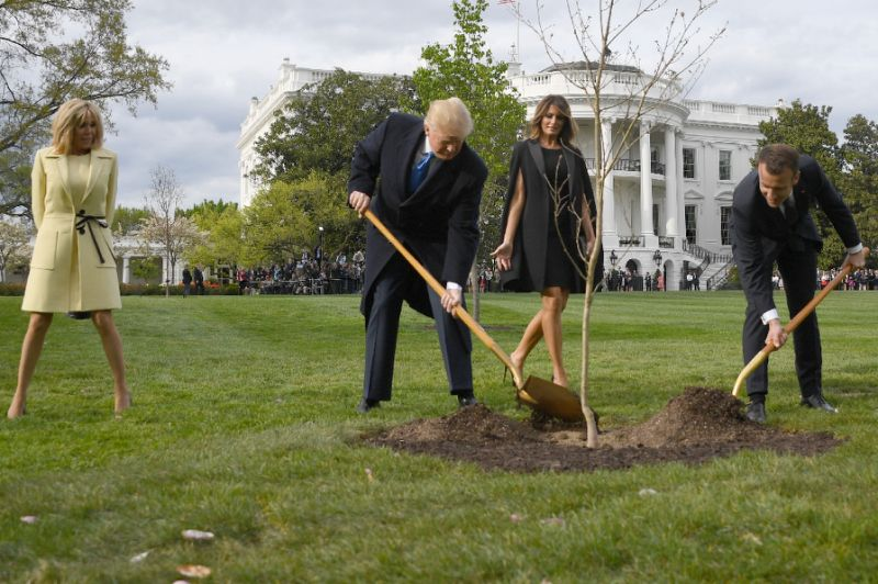 Tree planted by Trump and Macron goes 'missing'