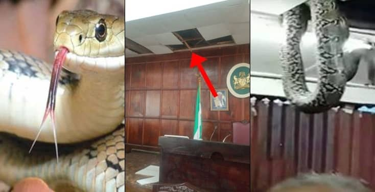 Pandemonium as three snakes chase lawmakers out of House of Assembly