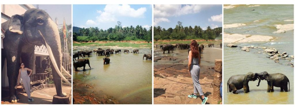 Pinnawala Elephant Orphanage - Sri Lanka weekend - Club Elsewhere - The World's Travel Diary edited by Rosie Bell - A guest post by Lara Olivia Miss Portmanteau