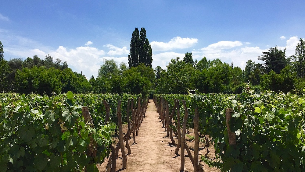 A Perfect Vineyard Stay in Argentina