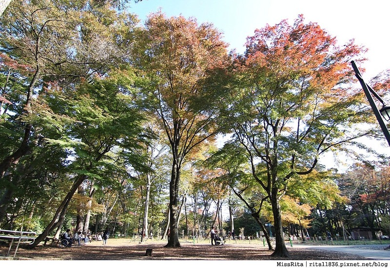 東京 好玩景點 三鶯之森吉力卜宮崎駿美術館 井之頭恩賜公園55