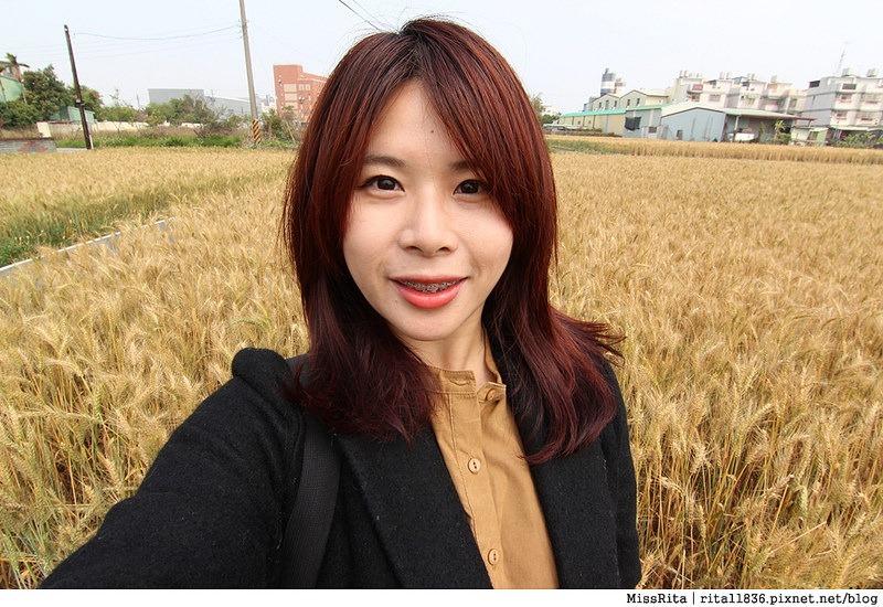 2015大雅小麥 台中大雅小麥 揚羊得薏麥飄鄉16