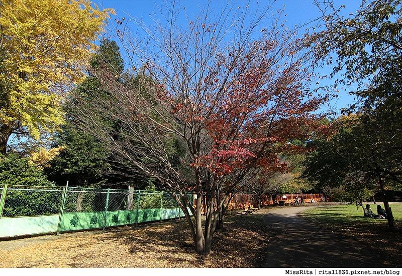 東京 好玩景點 三鶯之森吉力卜宮崎駿美術館 井之頭恩賜公園43