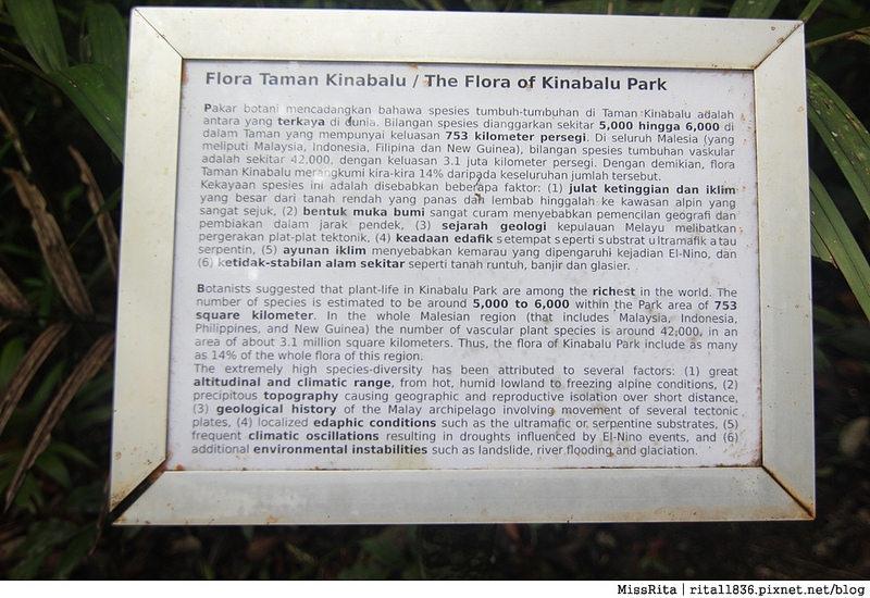 馬來西亞自由行 馬來西亞 沙巴 沙巴自由行 沙巴神山 神山公園 KinabaluPark Nabalu PORINGHOTSPRINGS 亞庇 波令溫泉 klook 客路 客路沙巴 客路自由行 客路沙巴行程34