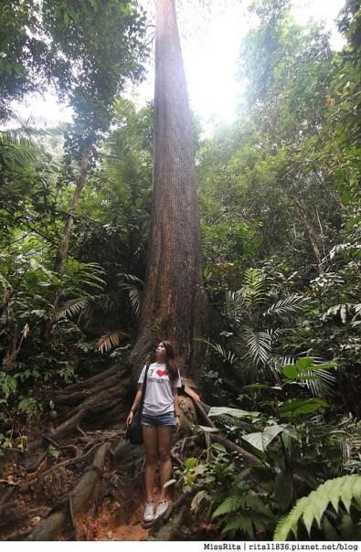 馬來西亞自由行 馬來西亞 沙巴 沙巴自由行 沙巴神山 神山公園 KinabaluPark Nabalu PORINGHOTSPRINGS 亞庇 波令溫泉 klook 客路 客路沙巴 客路自由行 客路沙巴行程62