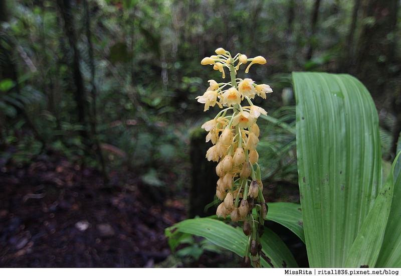 馬來西亞自由行 馬來西亞 沙巴 沙巴自由行 沙巴神山 神山公園 KinabaluPark Nabalu PORINGHOTSPRINGS 亞庇 波令溫泉 klook 客路 客路沙巴 客路自由行 客路沙巴行程18