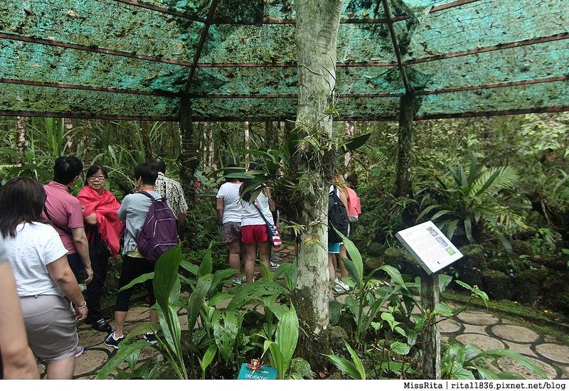 馬來西亞自由行 馬來西亞 沙巴 沙巴自由行 沙巴神山 神山公園 KinabaluPark Nabalu PORINGHOTSPRINGS 亞庇 波令溫泉 klook 客路 客路沙巴 客路自由行 客路沙巴行程32