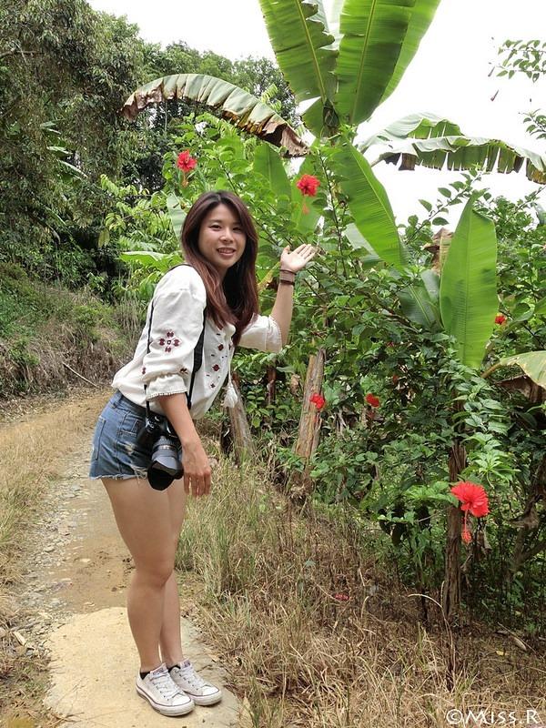 馬來西亞自由行 馬來西亞 沙巴 沙巴自由行 沙巴神山 神山公園 KinabaluPark Nabalu PORINGHOTSPRINGS 亞庇 波令溫泉 klook 客路 客路沙巴 客路自由行 客路沙巴行程80