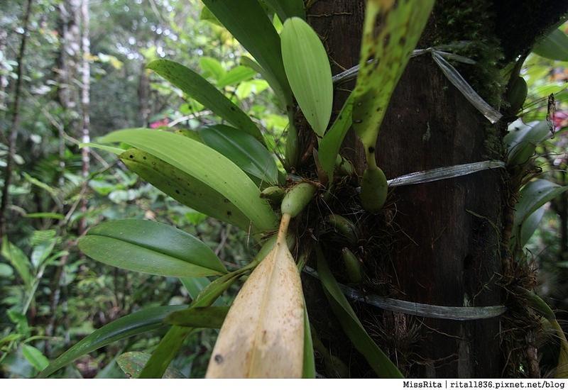 馬來西亞自由行 馬來西亞 沙巴 沙巴自由行 沙巴神山 神山公園 KinabaluPark Nabalu PORINGHOTSPRINGS 亞庇 波令溫泉 klook 客路 客路沙巴 客路自由行 客路沙巴行程24