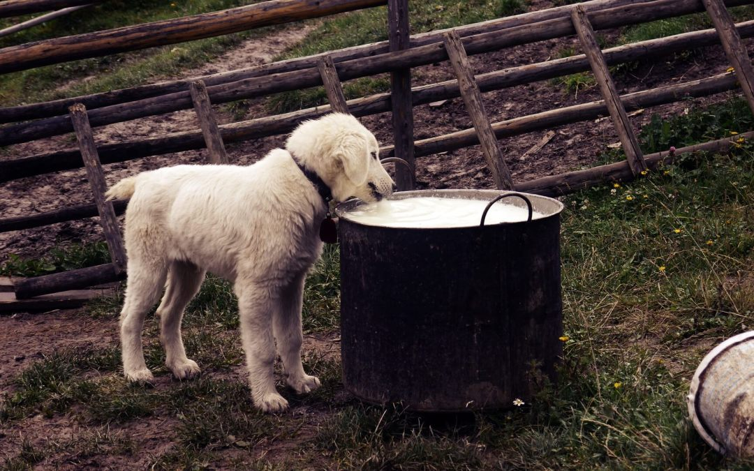 Principios básicos de la nutrición en perros y gatos