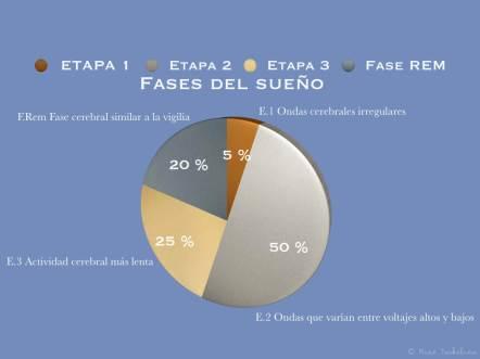 fases y porcentaje de los sueños