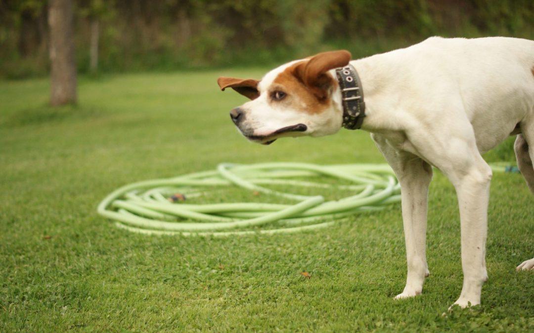 7 indicadores para detectar el estrés en perros