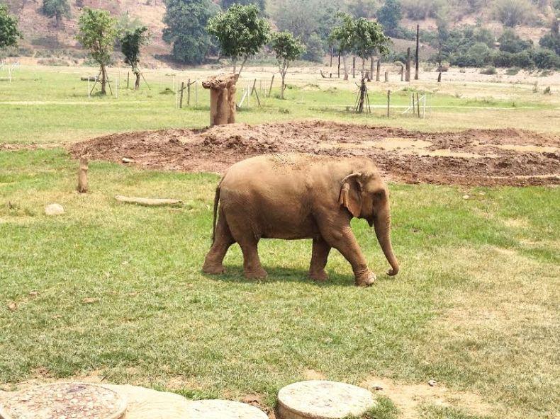 Sloni v Thajsku