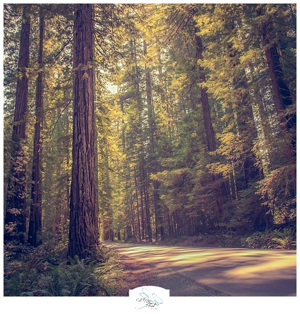 Vancouver, WA Photographer_0119