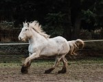 Dream Horse Photo Sessions.