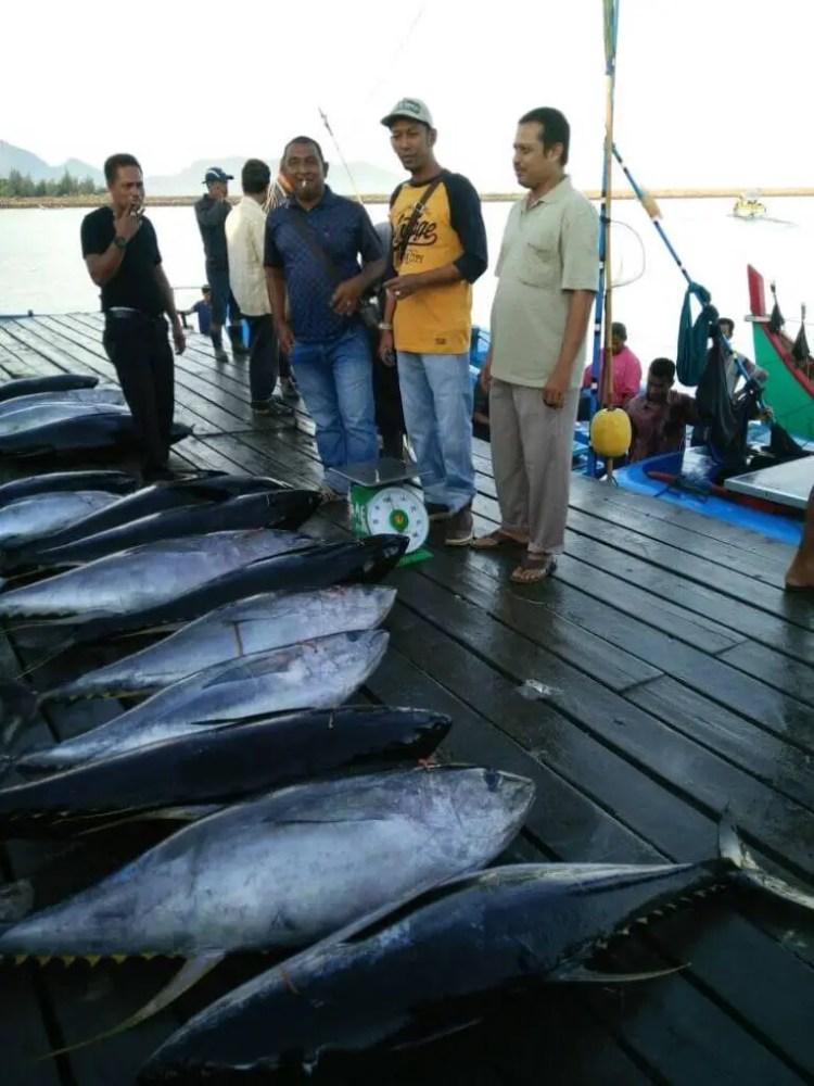 Ikan Tuna Sirip Kuning Asal AcehA