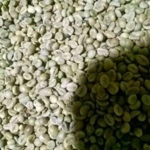 Robusta Greenbean Grade Excellent- Mister Exportir
