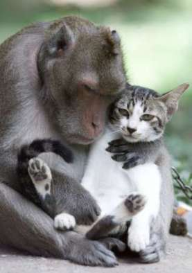 monkey and cat hugging
