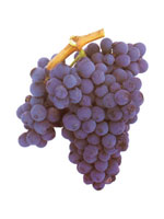 Baga Grapes