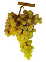 Pederna Grapes