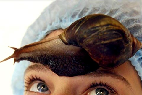 snail slime treatment for skin care