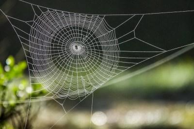 蜘蛛の持つスピリチュアルな意味7選!夢に現れる蜘蛛の意味も精神世界を研究する筆者がやさしく解説