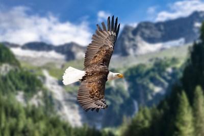 鷲のスピリチュアルな5つの意味とは?偉大な力・ポジティブなマインド・夢にでてきた時の8つの意味を鷲に詳しい筆者が解説
