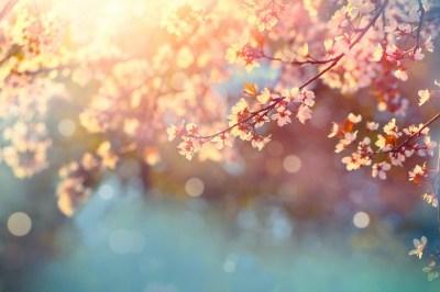春分の日がスピリチュアルな意味を持つのはなぜ?何が起こる?過ごし方・やると良いことは?スピリチュアルに詳しいサイキックカウンセラーが解説します!