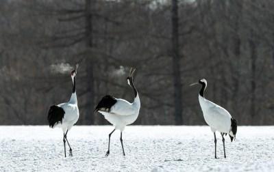 鶴が縁起がいい2つの理由とは?3つの幸運や千羽鶴の意味もスピリチュアルな世界に詳しい筆者が解説!