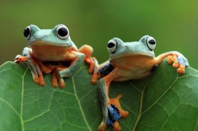 カエルの夢の18個の意味!幸運の予兆?大きなカエル・大量のカエル・緑のカエルなど状況別に夢占いに詳しい筆者が解説