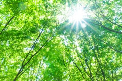 緑のオーラの意味とは?7つの性格の特徴・身体・お金・仕事・相性などヒーリング経験のある筆者が解説