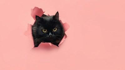 """愛猫が戻ってこない時に使える""""帰ってくる""""おまじない6選!スピリチュアル好きの筆者が大解説!"""