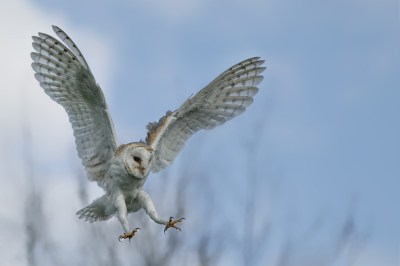 フクロウのスピリチュアルな意味10選!霊的特徴と夢に現れた時の4つの意味を精神世界を研究する筆者が解説