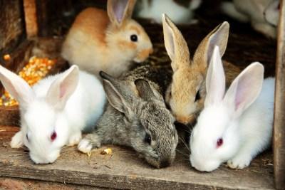 ウサギのスピリチュアルな意味7選!ウサギの習性・行動・伝説などからわかるスピリチュアル性を精神世界を研究する筆者がわかりやすく解説