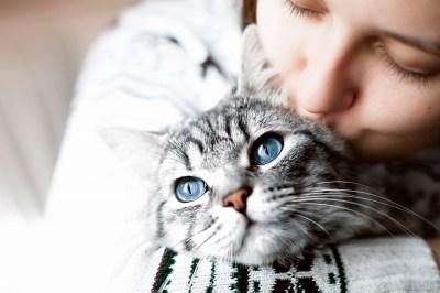 猫の縁起がよい6つの理由!縁起がよい猫の種類や他国での縁起内容も猫好きな筆者が解説