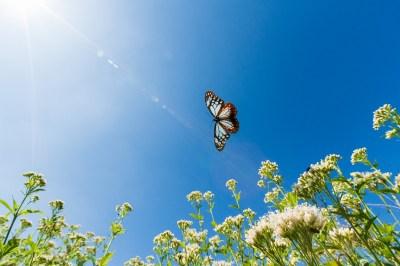 虫が寄ってくるスピリチュアルな5つの理由!幸運を運んでくれる?避けたい虫は?スピリチュアルに詳しい筆者が解説します!