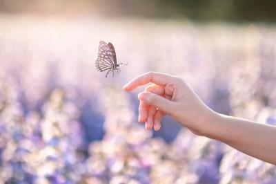 蝶が寄ってくる人のスピリチュアルな9つの意味!運気上昇・好転のサイン?蝶のスピリチュアルな3つの意味もヒーリング経験のある筆者が解説