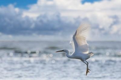 白鷺のスピリチュアルな8つの意味とは?見かけた時の3つの意味と合わせてヒーリング経験のある筆者が解説