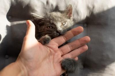 子猫の夢を見る意味とは?ポジティブ・ネガティブ両方の意味23選!精神世界を研究する筆者が解説