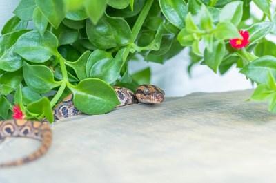 蛇の持つスピリチュアルな意味7選!蛇が表現する霊的な世界・他国での意味も精神世界を研究する筆者がスピリチュアルに解説